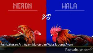 Pembahasan Arti Ayam Meron dan Wala Sabung Ayam
